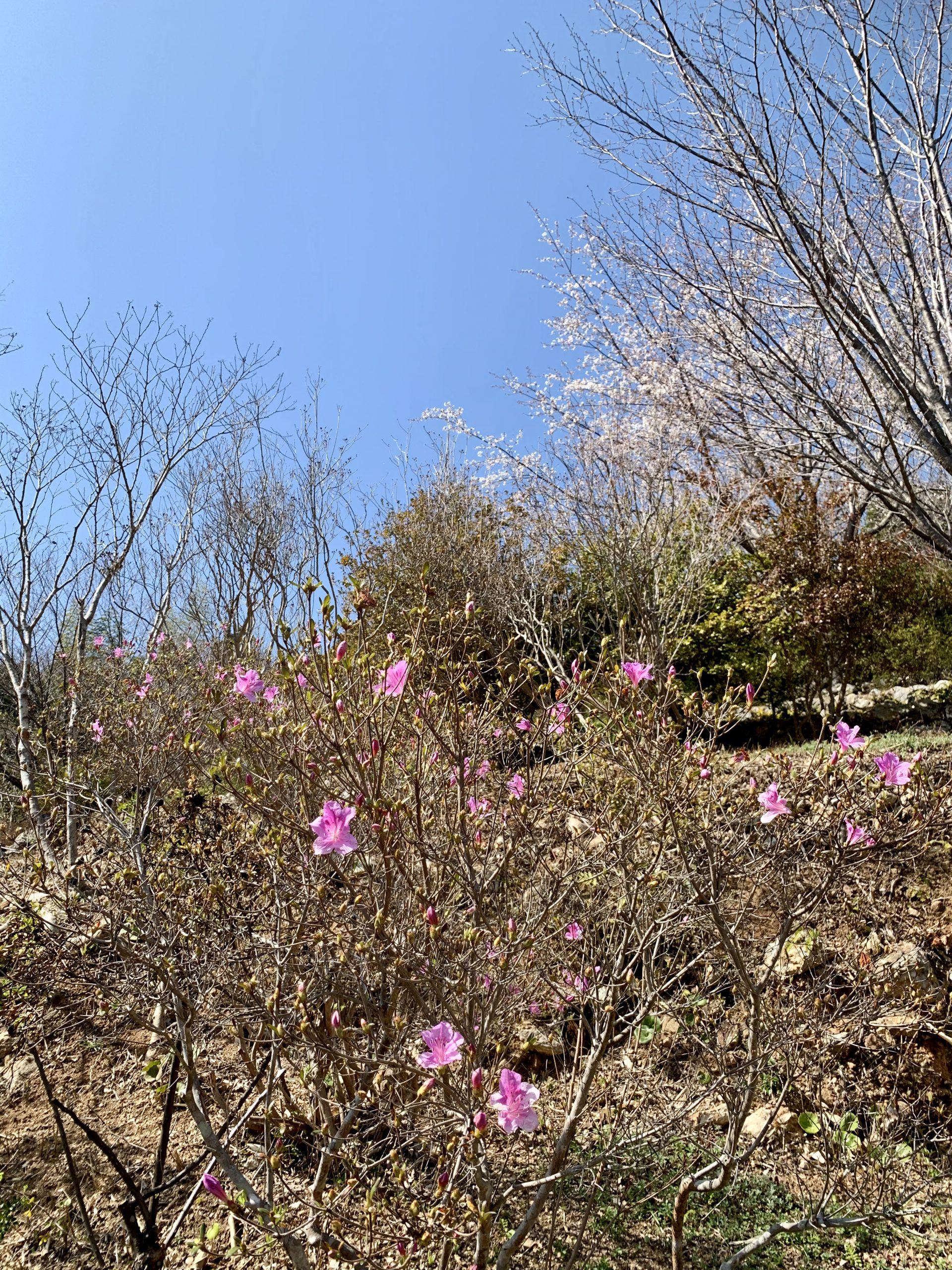 高知県立牧野植物園の春 2021.3.10撮影