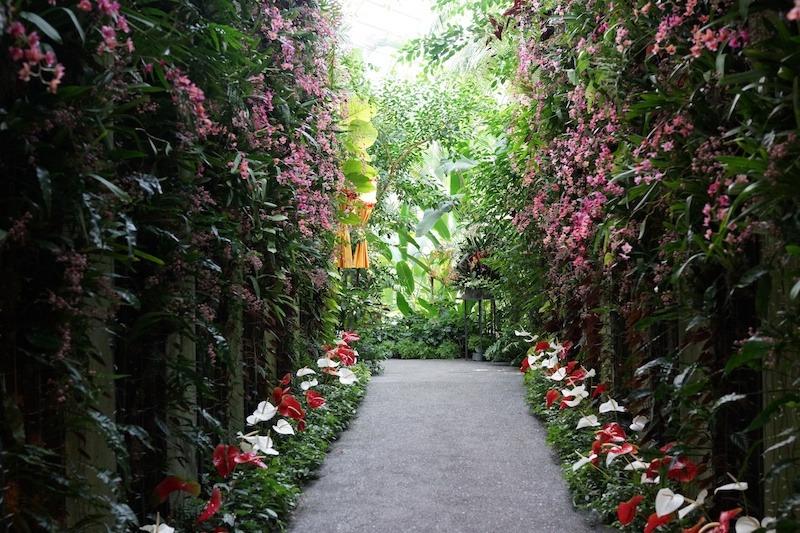 高知県立牧野植物園 2013.10撮影