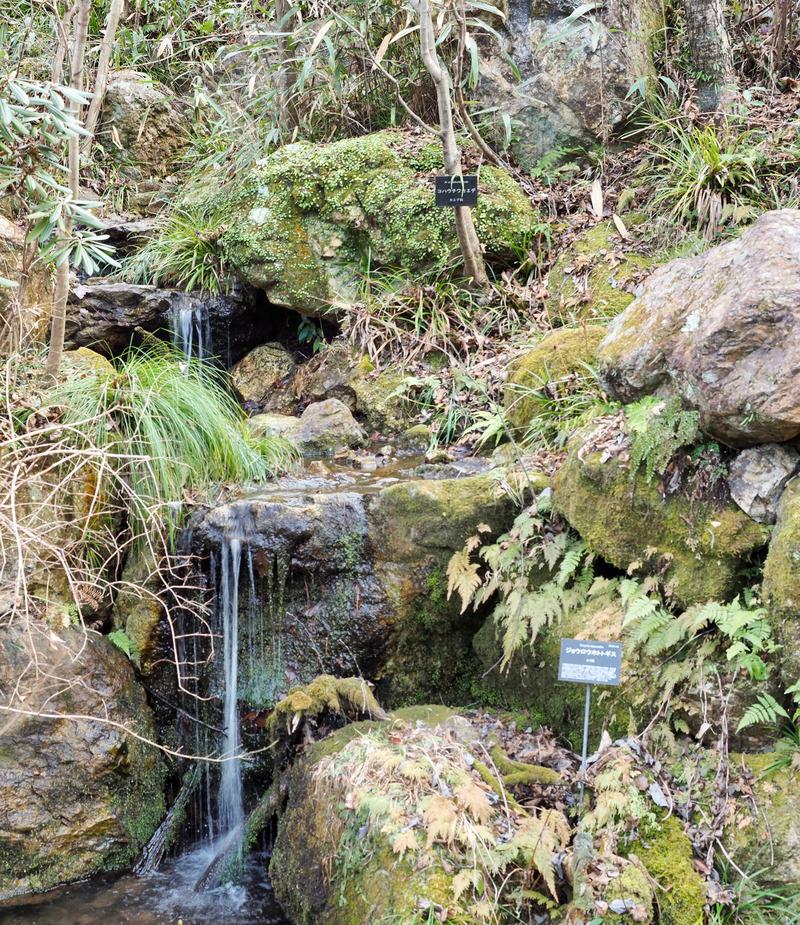 高知県立牧野植物園の春